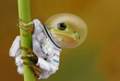 frog_astronaut vssec2