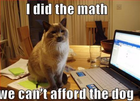 Pets 3-ihasafunny-cat-did-the-math-and-you-cannot-afford-the-dog1