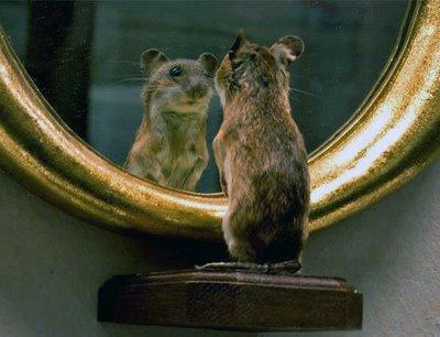 rat-mirror