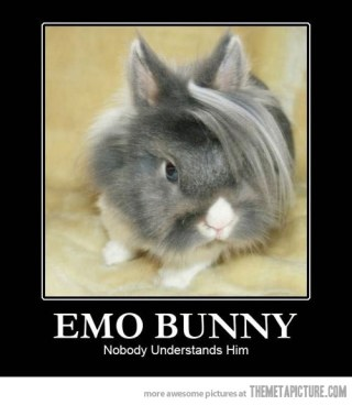funny-emo-bunny-hair
