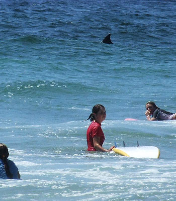 2 Shark Lesson Bluey's Beach NSW 2009 mathspig